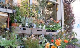 flower shop  NECO QAVREENO|花