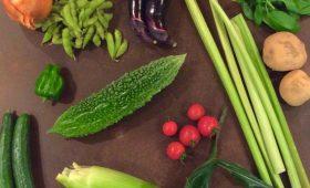 販売|夏野菜を食べる!
