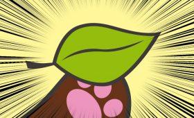 タヌキの葉っぱクーポン
